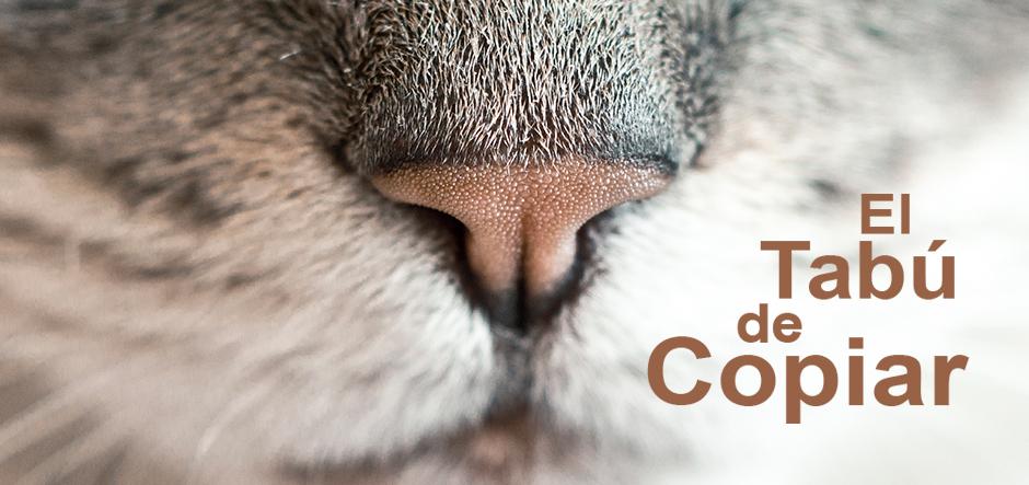 gato referencia